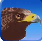 鹰狩猎之旅无限金币版