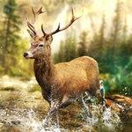 猎鹿冲突无限金币版