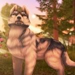 狼传说家园与爱心完整版